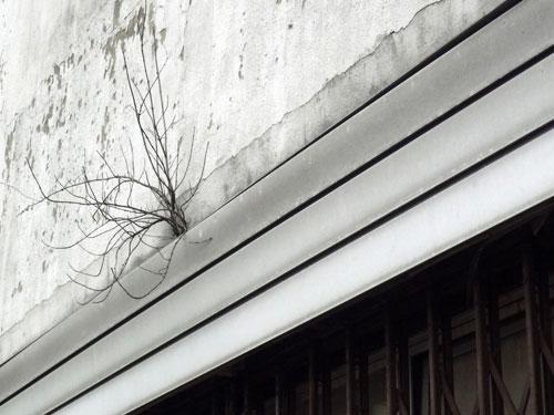 Jo-photo-poesie-urbaine-clic-clac-rocket-lulu